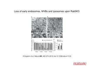 A Zeigerer  et al. Nature 485 , 465-470 (2012) doi:10.1038/nature11133