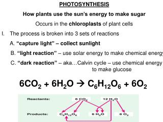 PHOTOSYNTHESIS How plants use the sun's energy to make sugar
