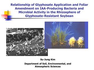 Relationship of Glyphosate Application and Foliar Amendment on IAA-Producing Bacteria and Microbial Activity in the Rhiz