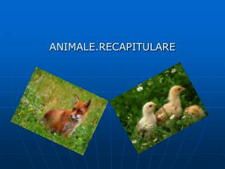ANIMALE.RECAPITULARE