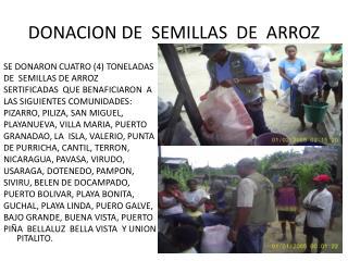 DONACION DE  SEMILLAS  DE  ARROZ