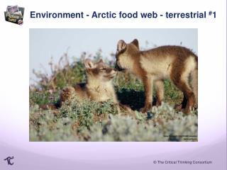 Environment -  Arctic food  web - terrestrial  # 1