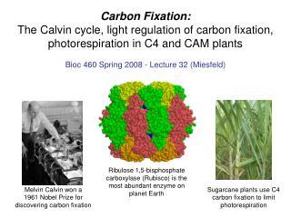 Bioc 460 Spring 2008 - Lecture 32 (Miesfeld)
