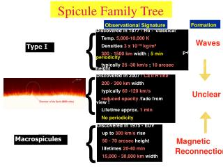 Spicule Family Tree