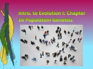 Intro. to Evolution I: Chapter 16 Population Genetics