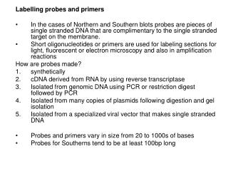 Labelling probes and primers