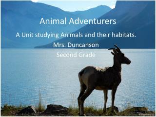 Animal  Adventurers