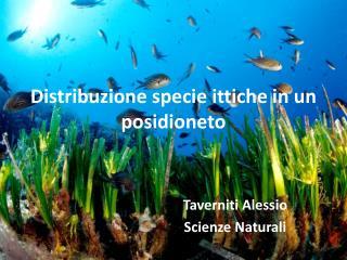 Distribuzione specie ittiche in un posidioneto