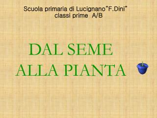 """Scuola primaria di Lucignano""""F.Dini"""""""