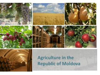 Agriculture in the  Republic of Moldova