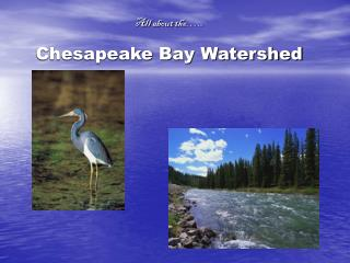All about the….. Chesapeake Bay Watershed