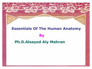 Essentials Of The Human Anatomy By Ph.D.Alsayed Aly Mahran