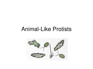 Animal-Like Protists