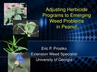 Adjusting Herbicide Programs to Emerging Weed Problems  in Peanut