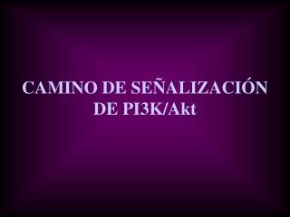 CAMINO DE SEÑALIZACIÓN DE PI3K/Akt