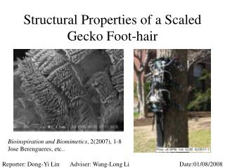 Structural Properties of a Scaled Gecko Foot-hair
