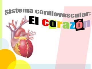 Sistema cardiovascular:  El  c o r a z ó n