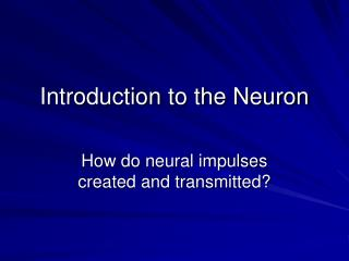Introduction to the Neuron