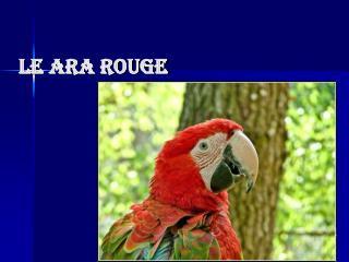Le Ara Rouge
