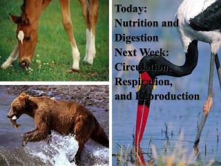 Today: Nutrition and Digestion Next Week: Circulation, Respiration, and Reproduction