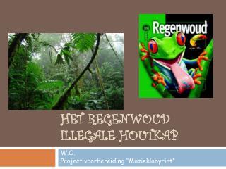 HET REGENWOUD Illegale houtkap