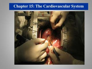 Chapter  15: The Cardiovascular System