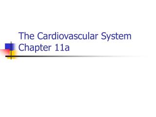 The Cardiovascular System Chapter 11a