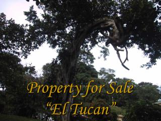 "Property for Sale ""El Tucan"""