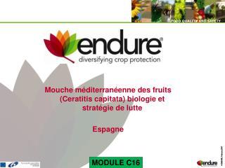 Mouche méditerranéenne des fruits (Ceratitis capitata) biologie et stratégie de lutte Espagne