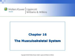 Chapter 16 The Musculoskeletal System