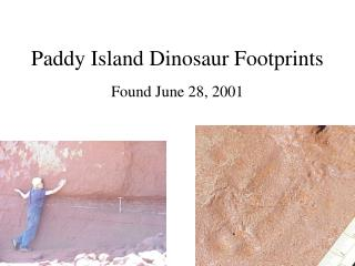 Paddy Island Dinosaur Footprints