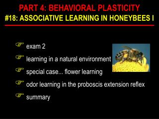 exam 2  learning in a natural environment  special case... flower learning