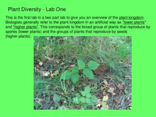 Plant Diversity - Lab One
