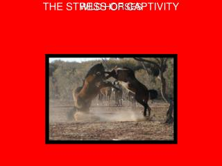 WILD HORSES THE STRESS OF CAPTIVITY