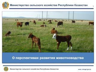 О перспективах развития животноводства