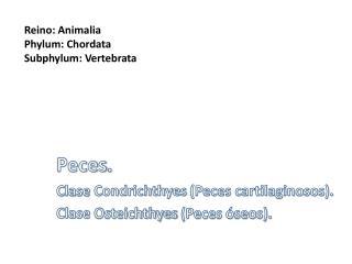 Peces . Clase  Condrichthyes  (Peces cartilaginosos). Clase  Osteichthyes  (Peces óseos).