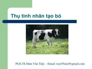 Thụ tinh nhân tạo bò