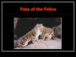 Fate of the Feline