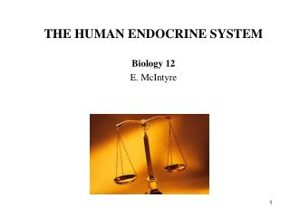 THE HUMAN ENDOCRINE SYSTEM Biology 12 E. McIntyre