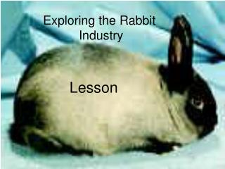Exploring the Rabbit  Industry