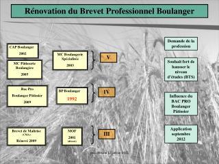Rénovation du Brevet Professionnel Boulanger