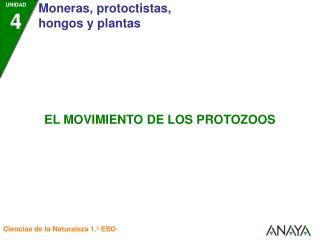 Los protozoos utilizan diferentes mecanismos para desplazarse: