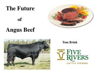 The Future  of  Angus Beef