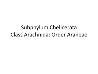 Subphylum Chelicerata Class Arachnida: Order Araneae