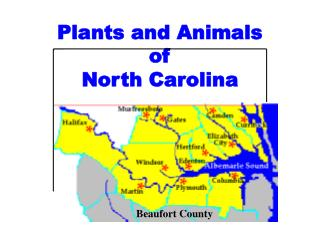 Plants and Animals  of  North Carolina