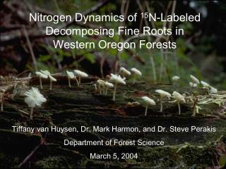 Nitrogen Dynamics of  15 N-Labeled Decomposing Fine Roots in Western Oregon Forests
