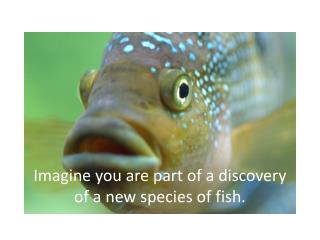 Imagine you are part of a discovery of a new species of fish.