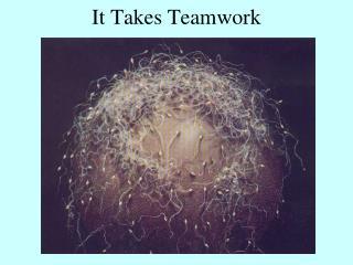 It Takes Teamwork