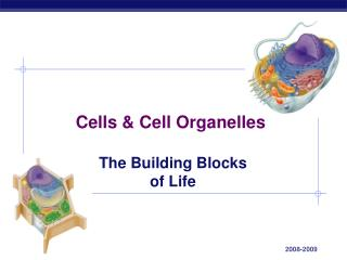 Cells  Cell Organelles