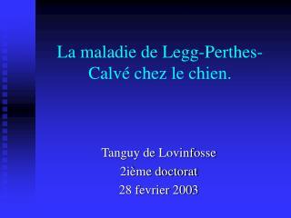 La maladie de Legg-Perthes-Calv  chez le chien.